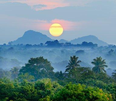 A foggy jungle view