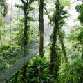 Costa Rica's Cloud Forests - 6 Days