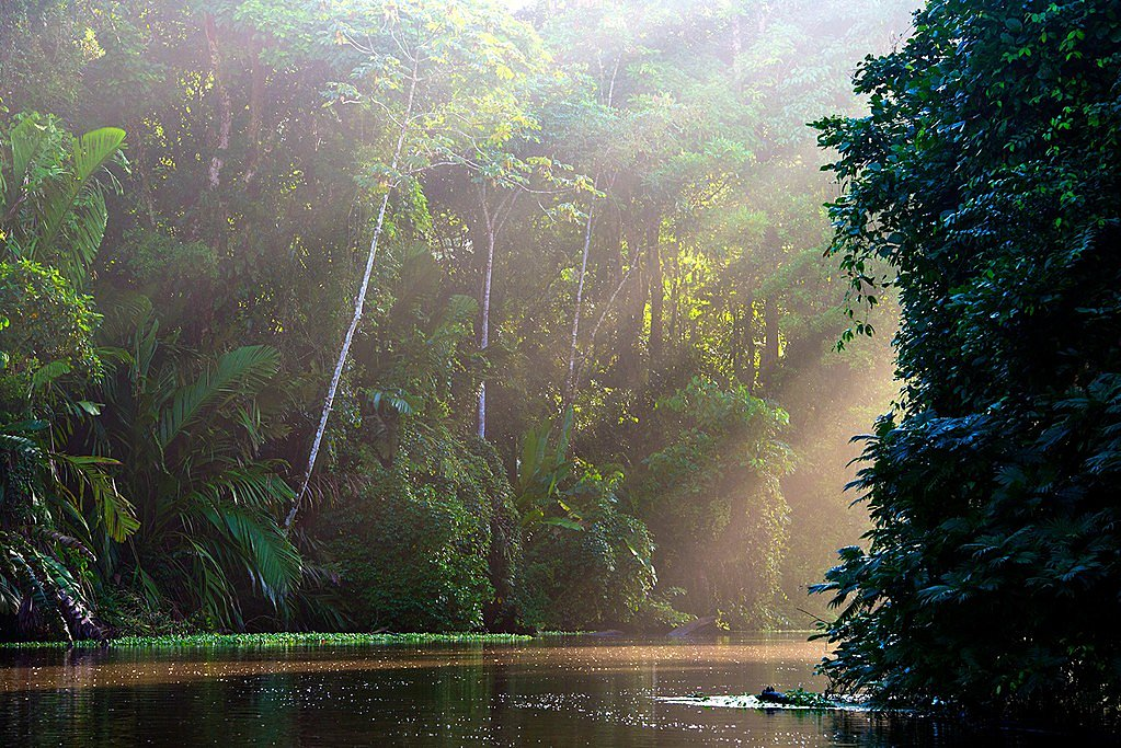 Riverbank lined with untouched rainforest in Tortuguero