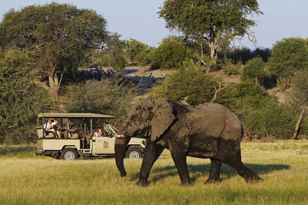 Elephant on game drive