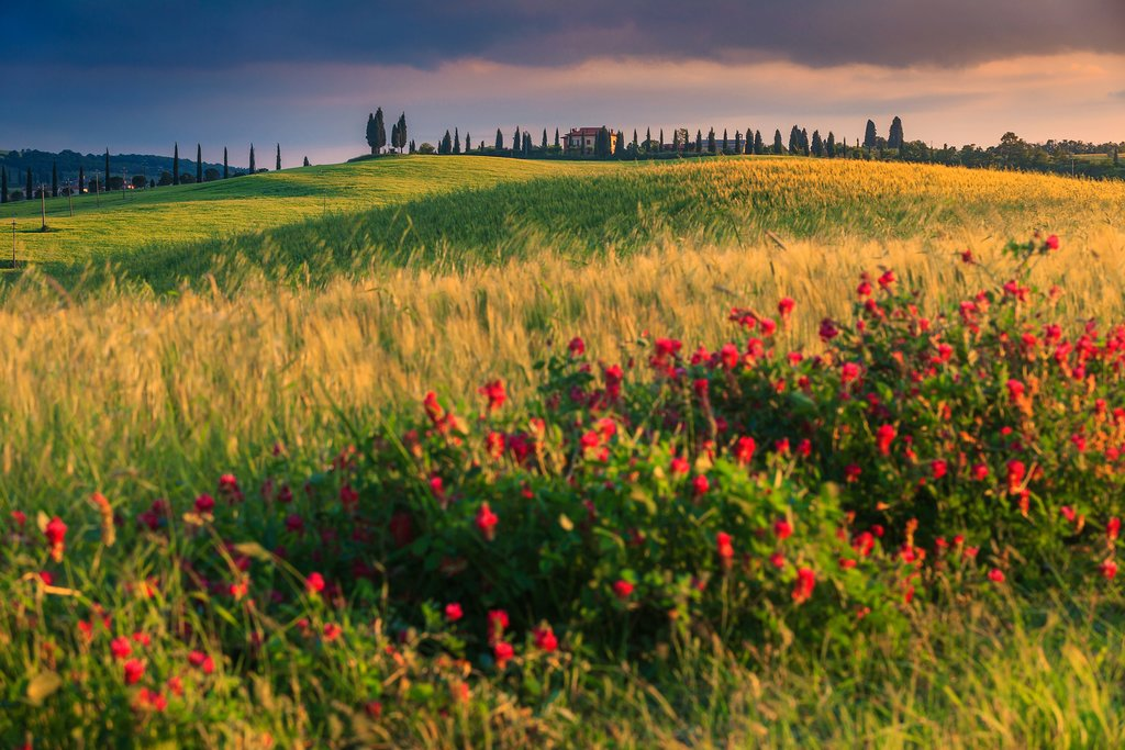 Take in the blossoming poppies of Pienza in  Tuscany's Siena province