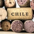 Chile's Famous Wine Valleys - 6 Days