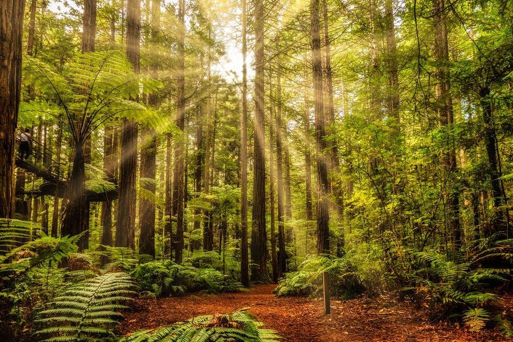 Redwoods Forest, Rotorua