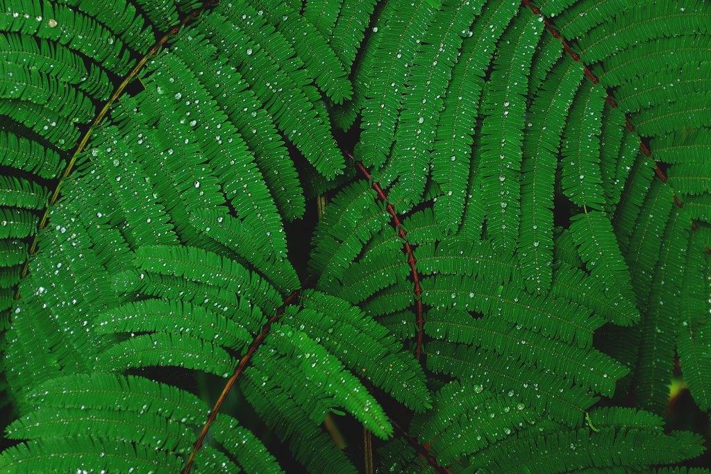 Water on leaves after an Amazon downpour