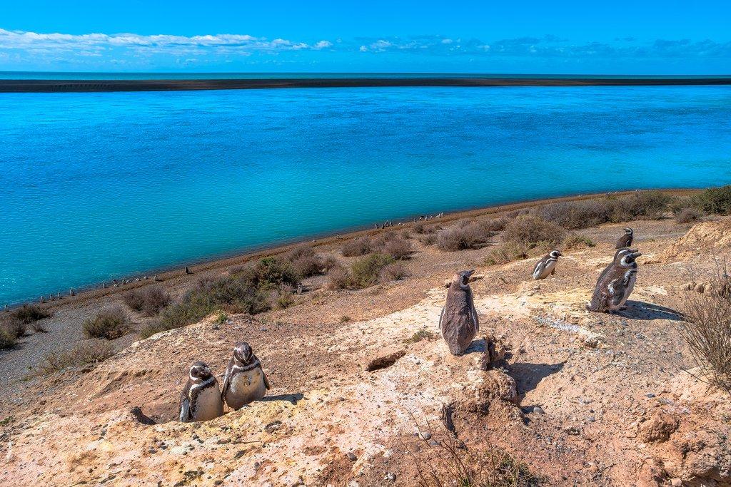 Exploring Argentina's Wildlife & Culture - 10 Days