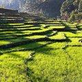 Nepal in August