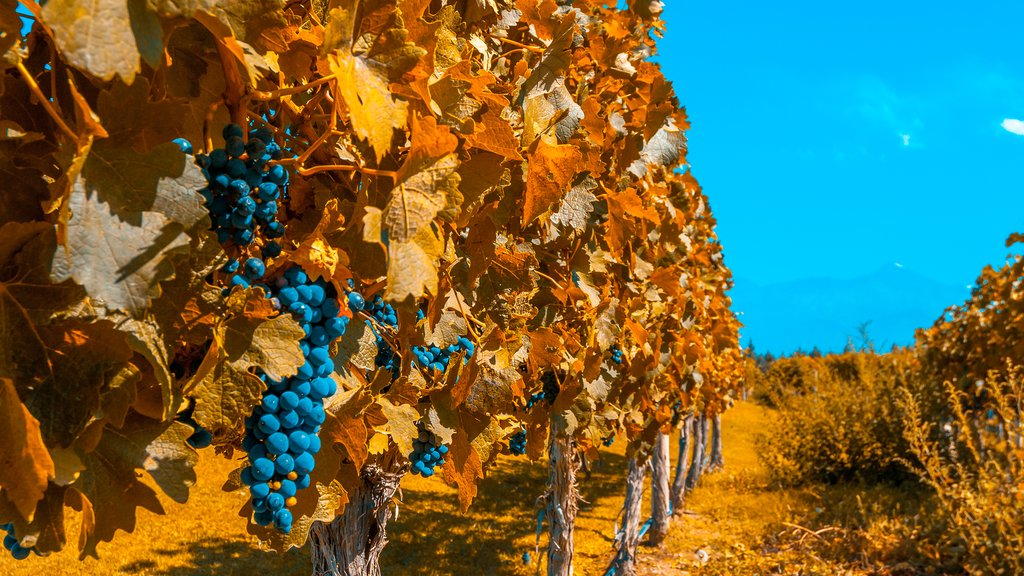 Vineyards of Mendoza in autumn.