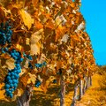 Exploring the Wine Regions of Argentina & Chile - 9 Days