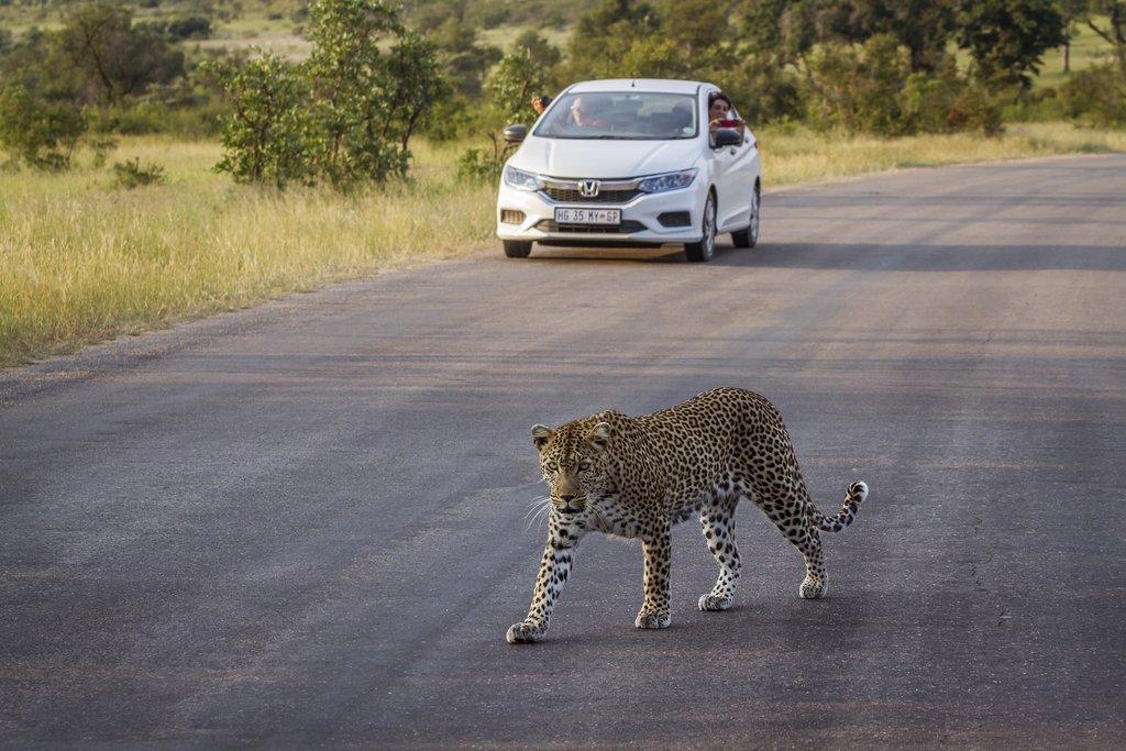 Casual road crossing