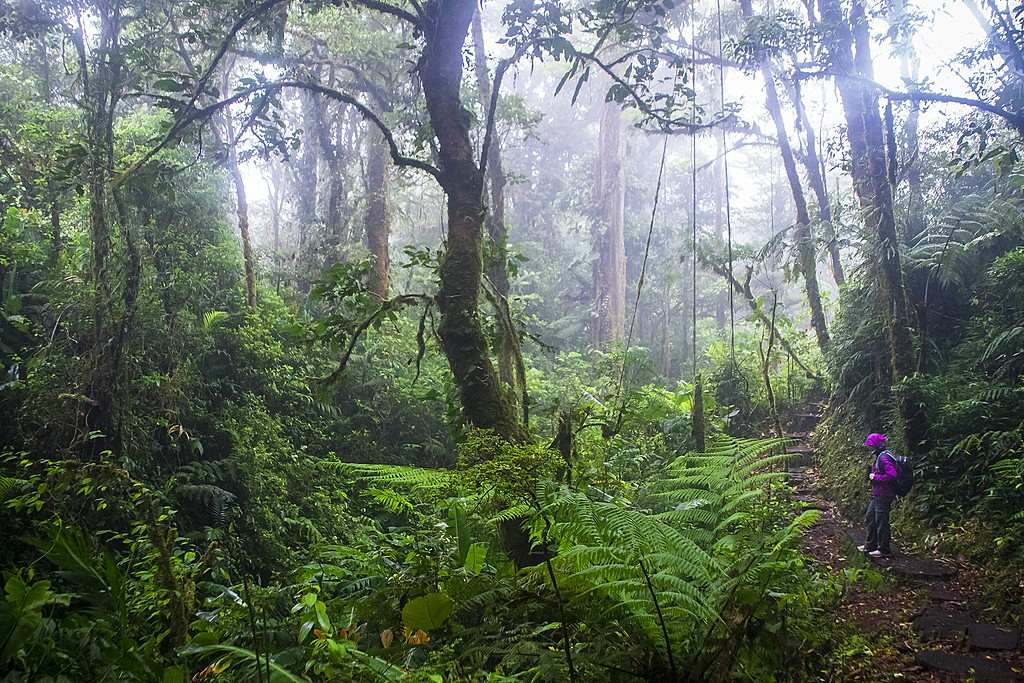 Explore the cloud forest in Monteverde