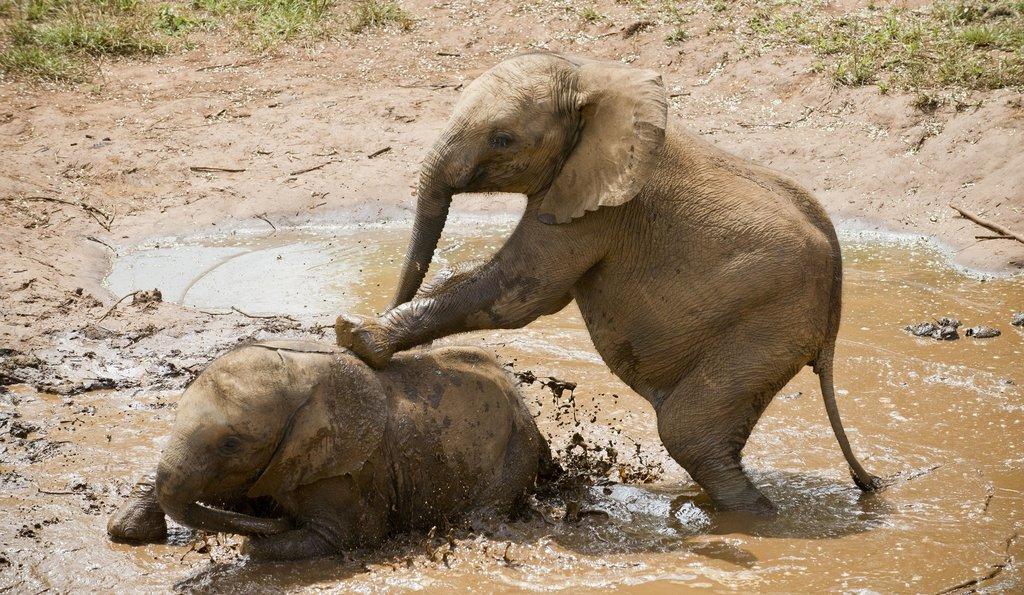 Orphaned Elephants at Lilayi