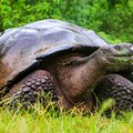 Galapagos Cruise: Wildlife Watching, Snorkeling & Hiking - 11 Days