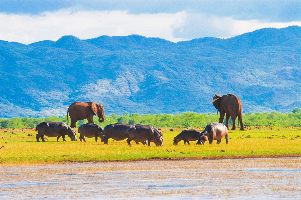 Wildlife on Lake Kariba