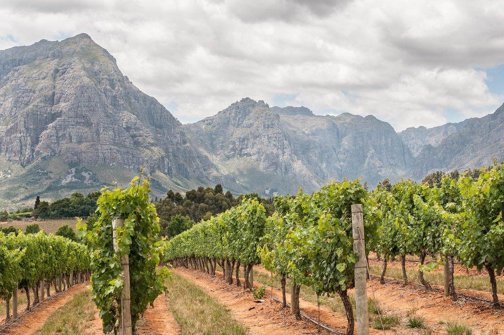 Vineyards near Stellenbosch