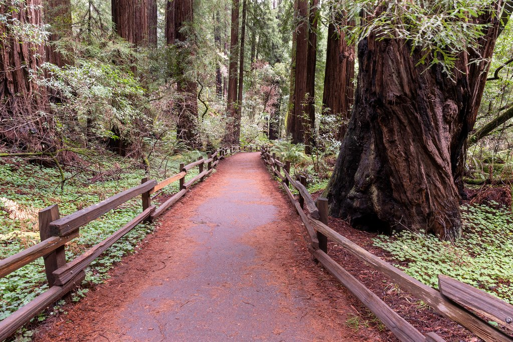 Muir Woods, just half an hour's drive from downtown San Francisco