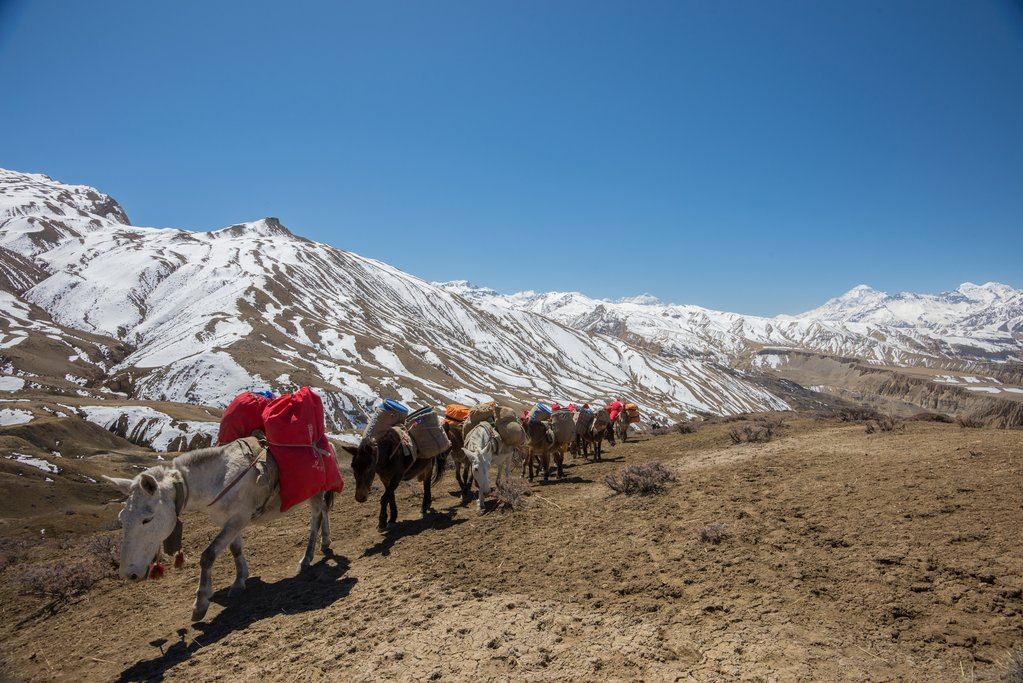 Donkey Train in Upper Mustang