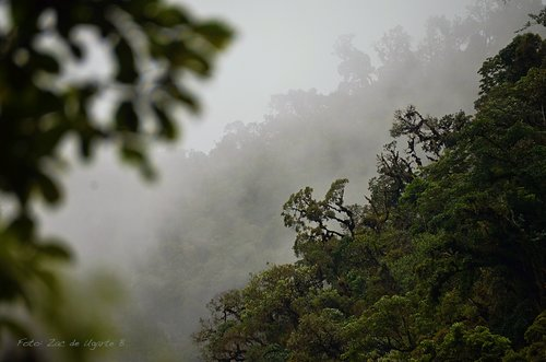 Cloud Forest in the Amazon Jungle