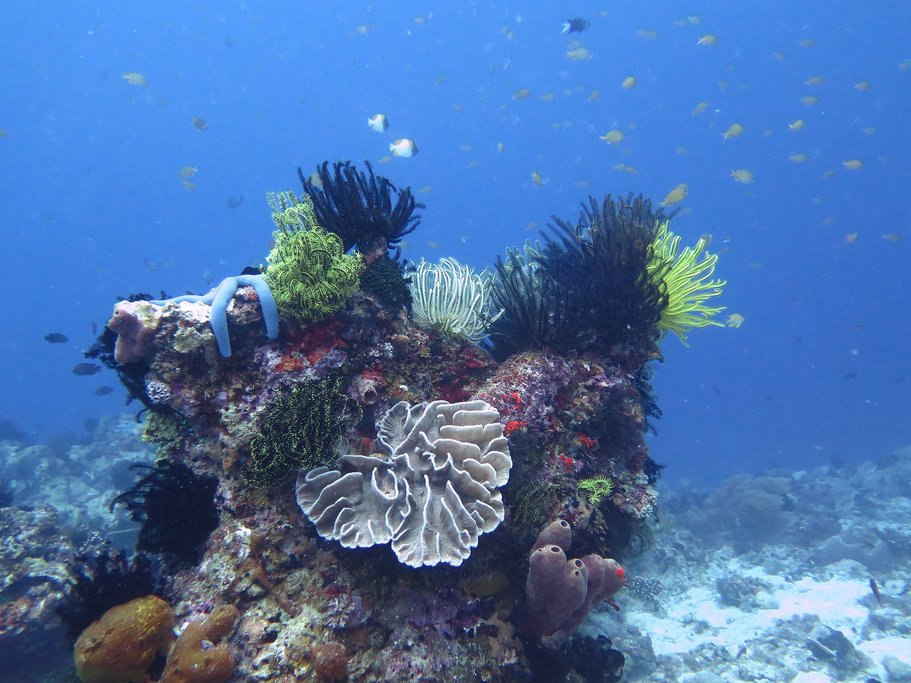 View of a reef off the coast of the Philippines