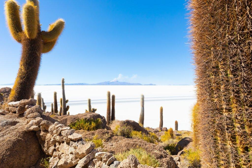 Views of Salar de Uyuni from Incahuasi Island