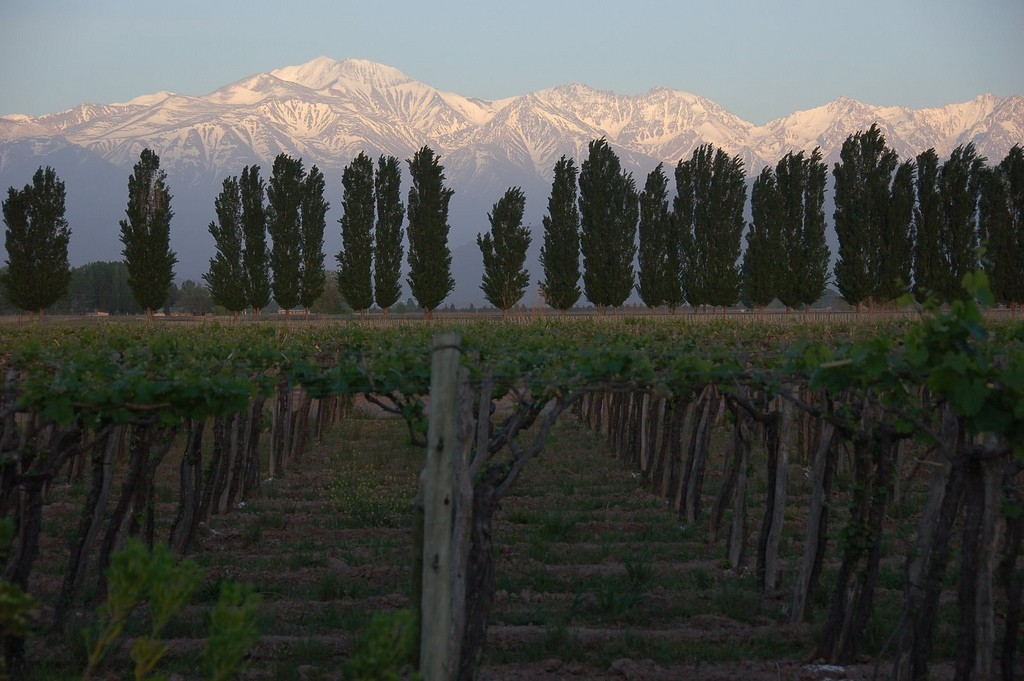 Argentina's Wine Country: Buenos Aires & Mendoza - 5 Days