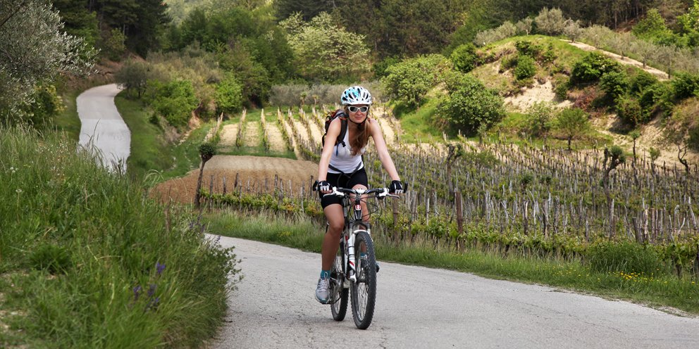 Istrian rolling hills and vineyards, Croatia