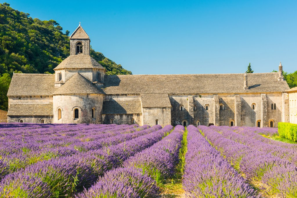 A lavender field in Provence