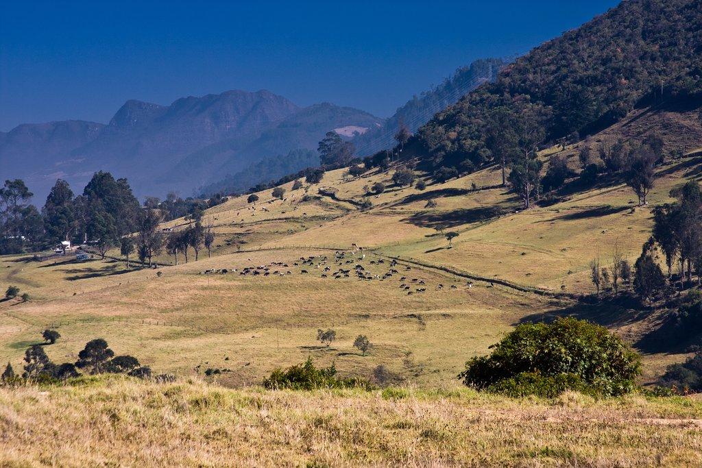 Farmland located near Bogotá