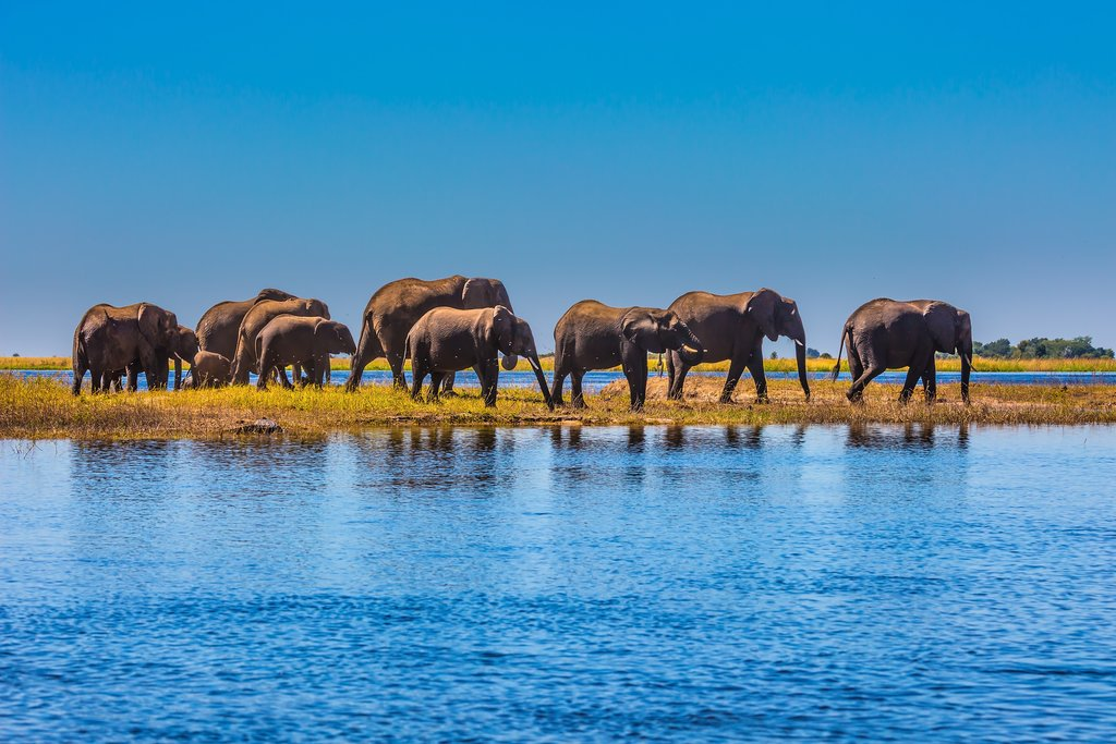 An excess of elephants