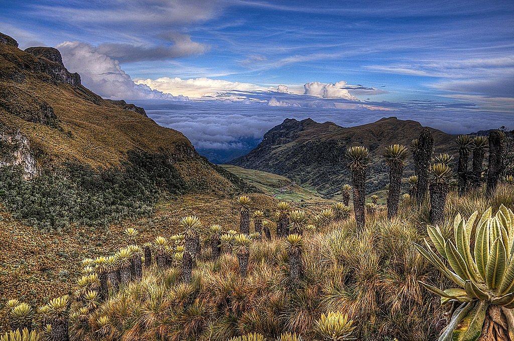 Paramillo del Quindío, PNN Los Nevados, Colombia
