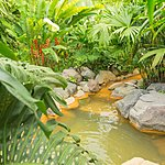 Natural hot spring in Arenal
