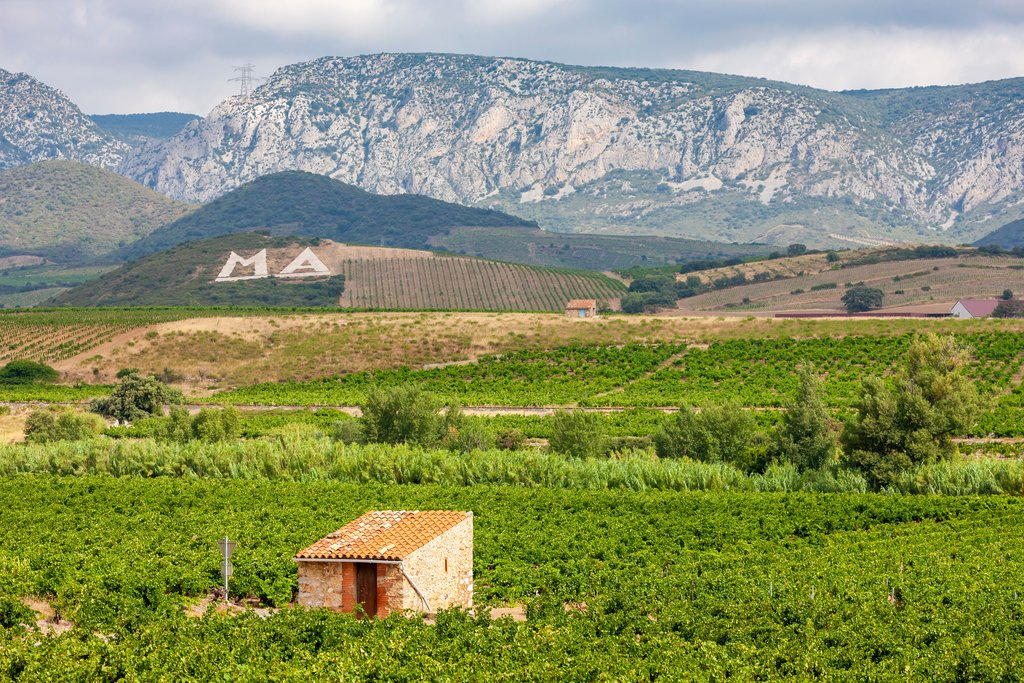 Vineyards in the Languedoc-Roussillon wine region