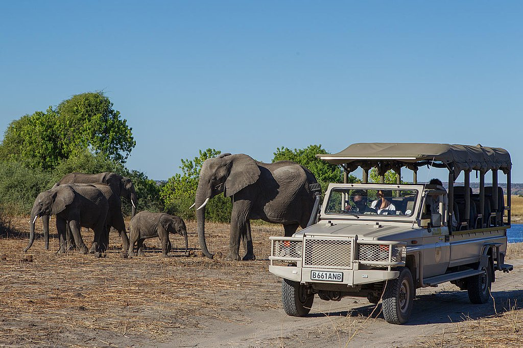 Elephants during the Safari