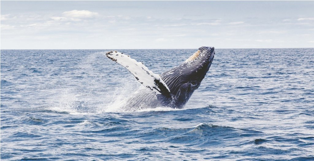 Go on a whale watching tour from July-October