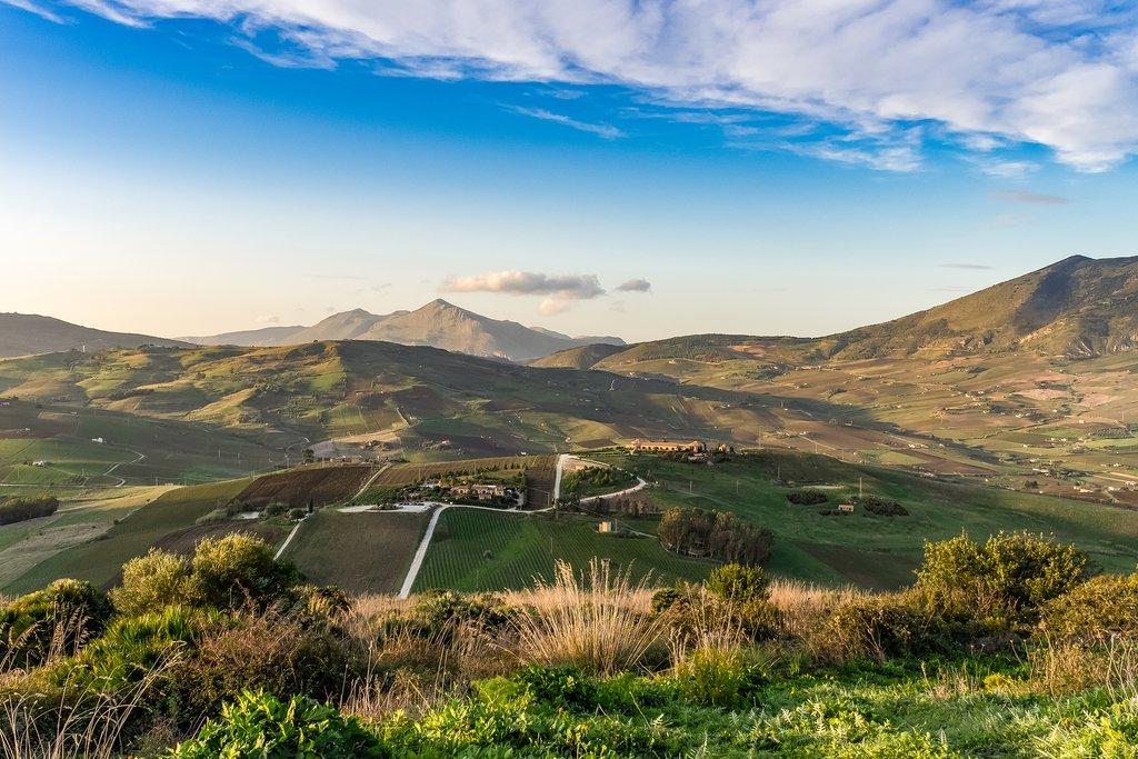 Vineyards in Trapani, Sicily