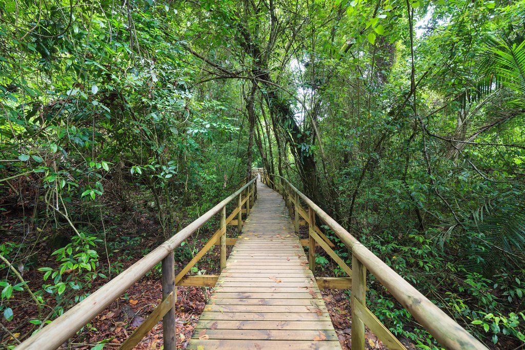 Boardwalk in the rainforest of Manuel Antonio
