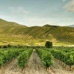 Beautiful Greek Vineyards