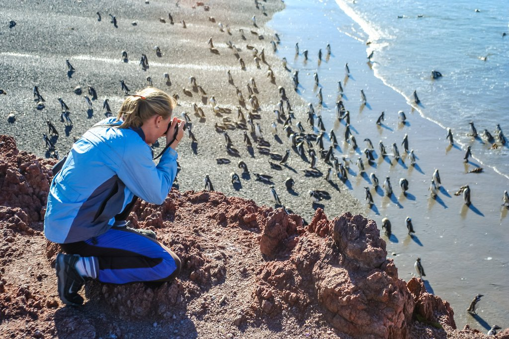 Get up close with the penguins at Punta Tombo