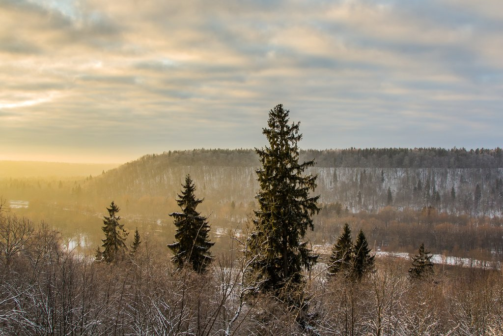 The Gauja Valley on a winter morning