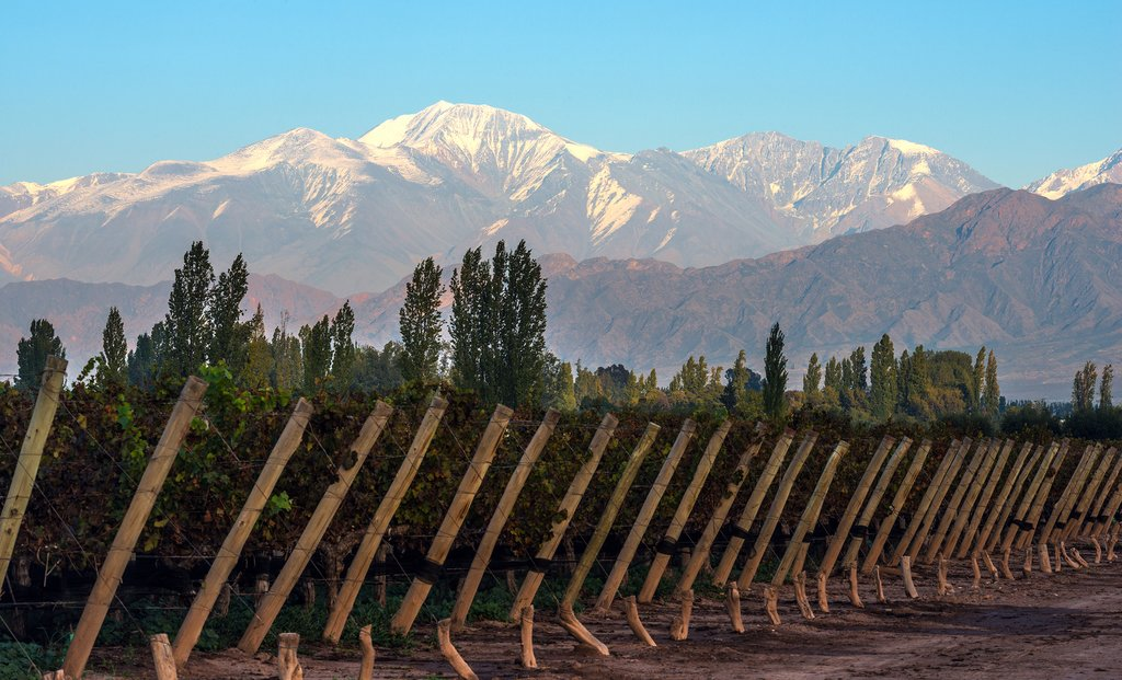 A vineyard in Mendoza with snowcapped mountains
