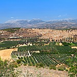 Sample the products of the Cretan countryside