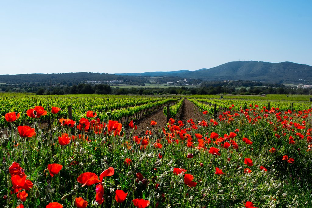 Take a wine tour of the vineyards near Barcelona