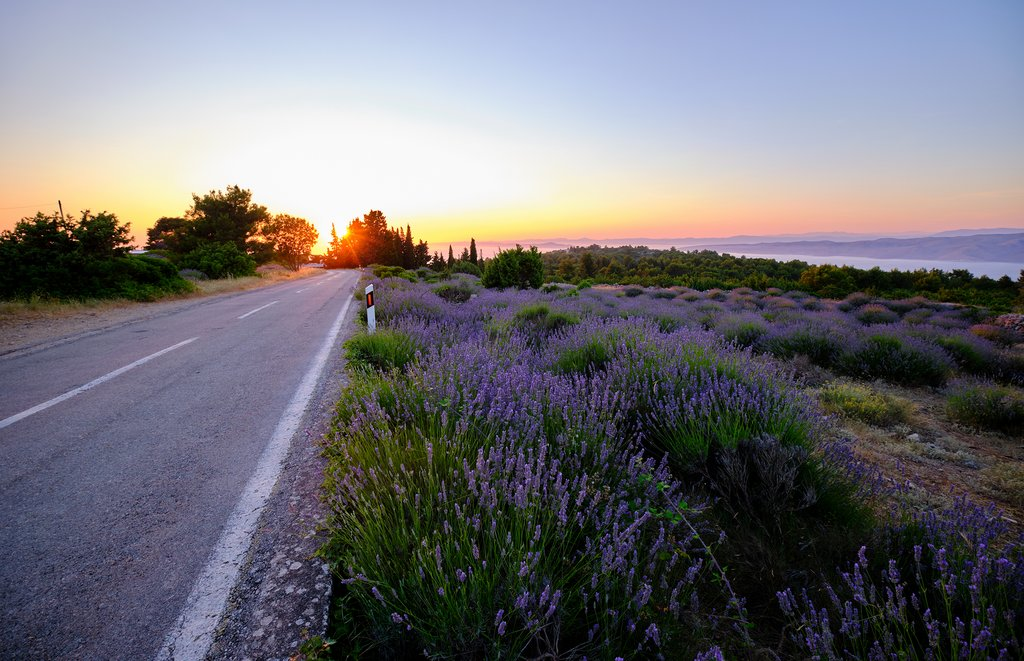 Lavender fields along the roads of Hvar Island