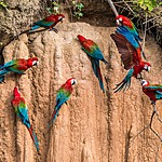 Enjoy an early morning tour to see macaws and other birdlife