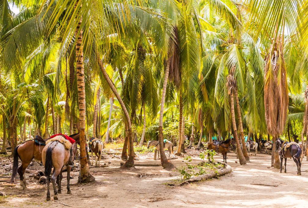 Popular mode of transport within Tayrona