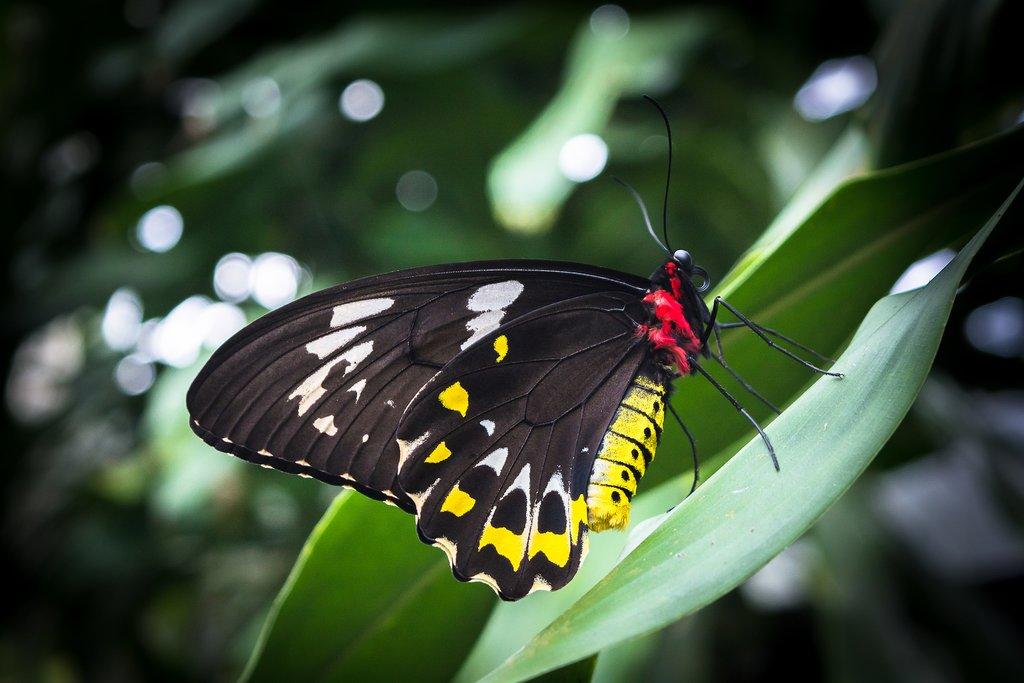Explore the Australian Butterfly Sanctuary