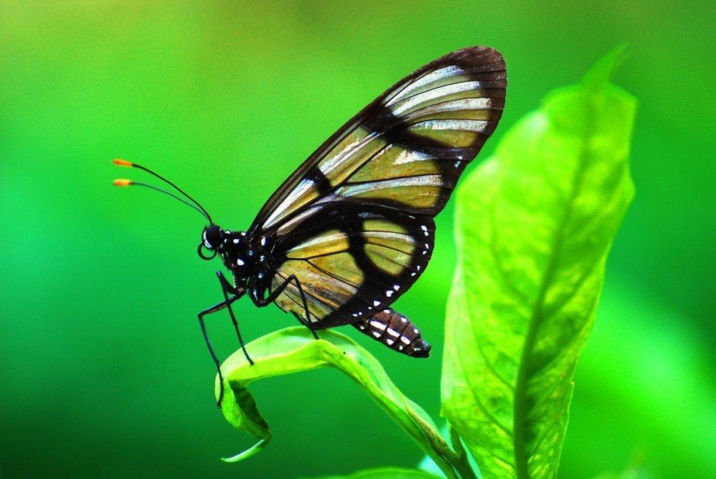 Butterfly in Yasuni