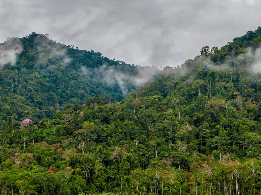 Cloud forest in Manu National Park