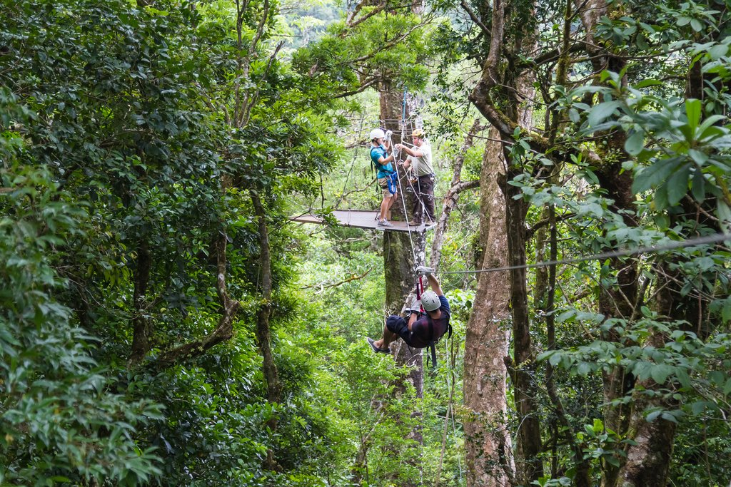 Ziplining through the treetops