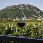 Wine Tasting on Hvar
