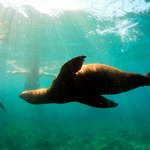 Snorkel with sea lions in Puerto Madryn